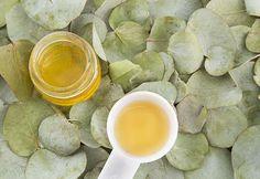 Okaliptus yağının faydaları Okaliptus yağı, geçmişten günümüze kadar bir çok hastalıkta şifa niyetine kullanılan yağlar arasında yer ...