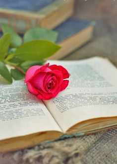 rose and book. #reading, #books