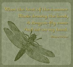 A dragon-fly.