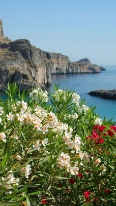 Oleander bushes at Lindos, Rhodes, Greece. My interest on these historic islands is not the beaches, but the history, flora, and fauna. Why did folks settle here? What was the draw? I'd find it hard to leave.