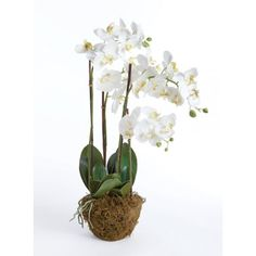 "THE WELL APPOINTED HOUSE - Luxury Home Decor- 30"" Phalaenopsis Orchid Silk Floral Drop-In"