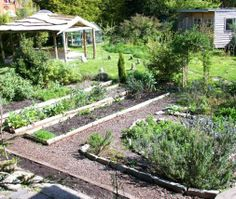 Keeping Slugs & Snails Off Your Veggies - Compassionately