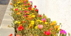 Design Case, Bonsai, Garden Design, Home And Garden, Wisteria, Gardening, Cottages, Medicine, Plant