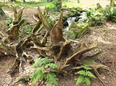 The Stumpery on the Lakeside Walk on the Trentham Estate.