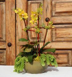 Yellow Orchid Garden.  $119.00