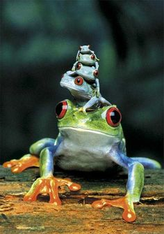 Hahaha...frogs are the coolest.  I'll dig up source info for this photo later.