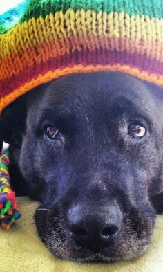 nice colorful hat on a black beauty in a hat