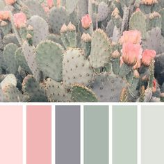 Color Pastel color palette from cacti.Pastel color palette from cacti. wandfarbe pastell Cacti Color Pastel color palette from cacti. Pastel Colour Palette, Colour Pallette, Pastel Colors, Color Combos, Color Schemes Colour Palettes, Color Palette Green, Bedroom Color Schemes, Apartment Color Schemes, Paint Schemes