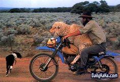 Weirdest Show on Wheels: Bizarre Photos of Motorcyclists Australian Memes, Australian Animals, Australia Funny, Iconic Australia, Visit Australia, Western Australia, Australian Photography, Bizarre Photos, Caption Contest