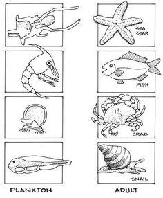 FIO Field Studies in Marine Science 2013: Holoplankton