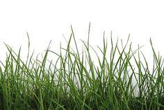 411_Green-Grass-Detail.jpg 500×338 Pixel