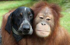 cross-species friendship