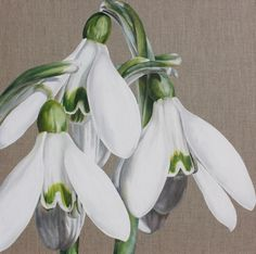 Flower Paintings by Sarah Caswell  Candlemass Belles