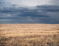 Prairie Grassland with Stormy Sky by Julie Magers Soulen