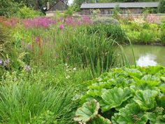 The Wetlands Garden - Natural Landscaping, Gardening, and Landscape Design in the Catskills and Hudson Valley including Ulster County, Ellen...