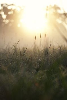 Morning sun | via pinterest | We Heart It