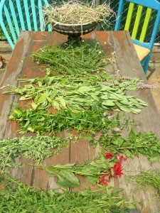How-To Dry Herbs, and Make Your Own Herbal Tea Blends