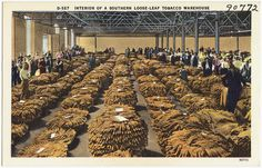 Postcard circa 1930-45. Interior of a Southern loose-leaf tobacco warehouse by Boston Public Library, via Flickr
