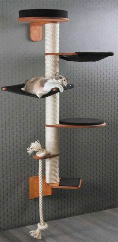 Height 186 cm Weigh Height 186 cm Weight 19 kg Wall Mounted Cat Tree Model Wendelin consists of modules: Wall bracket (H 22 cm B 13 cm T 37 cm) Step (W 30 cm D 33 cm H cm) Rope holder with sisal rope (W 13 cm D. Mimi Chat, Diy Cat Tree, Cat Trees Diy Easy, Cat Towers, Cat Shelves, Cat Playground, Playground Design, Cat Room, Cat Condo