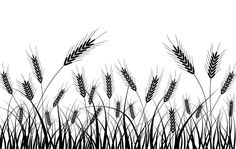 A black and white wheat silhouette vector Vector plant Wheat Drawing, Wheat Vector, Silkscreen, Silhouette Clip Art, Flower Silhouette, Wheat Fields, Vector Background, Line Drawing, Drawing Tips
