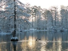 16) Swan Lake of Sumter, SC: This is the only public park that holds all 8 swan species and is home to the Iris Gardens.
