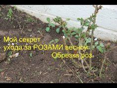 При выращивании роз в своем саду рекомендуется придерживаться правил агротехники и при выявлении заболеваний, как можно скорее проводить обработку кустов. Landscape Design, Flowers, Plants, Link, Youtube, Vegetable Garden, Sodas, Garten, Flora