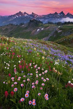 Meadow in the mountains
