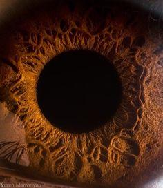14 Incredible Micro Shots of Human Eyes Complexity
