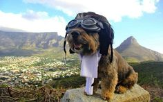 The Cute Adventures of Oscar the Globetrotting Dog