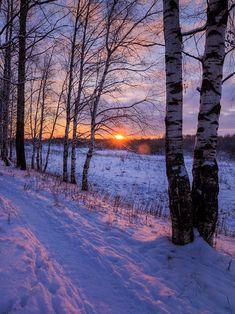 ***Path through the birch grove (Kirov, Kirov Region, Russia) by Sergey Ponomarev❄️🇷🇺 Winter Sunset, Winter Scenery, Winter Trees, Winter Snow, Landscape Photography, Nature Photography, Travel Photography, Winter Magic, Snow Scenes