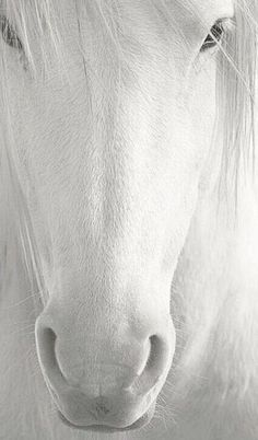 Cavalo branco Broncos will be in the new system! All The Pretty Horses, Beautiful Horses, Animals Beautiful, Beautiful Things, Beautiful Beautiful, Absolutely Gorgeous, Beautiful Images, Horse Pictures, Animal Pictures