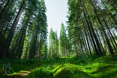 Fact Of The Day! - India Set To Spend Over £4 Billion On Restoring Forests. Click visit to read the full story.