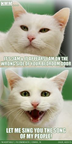 Doesn't matter which side it is - it's the wrong side. #catitude #funny #cats