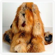 Commun chien de poche   Recyclage de vos manteaux