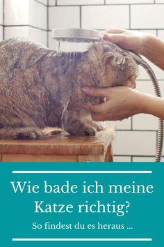 Katzen mögen das Wasser nicht so besonders, denn sie sind meist extrem wasserscheu. Grundsätzlich müssen Katzen weder gebadet noch gewaschen werden, denn sie reinigen ihr Fell selbst mehrmals am Tag. Katzen sind ausgesprochen reinliche Tiere. Sie sind stets um ihre eigene Sauberkeit bemüht.  #katzen #katzenbaden #katzentipps #katzenwissen #katzenpflege