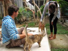 French volunteers giving some attention to rescued cats at Villa Kitty, Lodtunduh, Bali.
