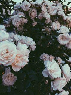 """freepeople: """"  Fleur. """""""