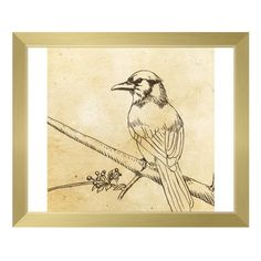 """Click Wall Art 'Bluejay' Framed Graphic Art Size: 13.5"""" H x 16.5"""" W x 1"""" D, Frame Color: Gold"""