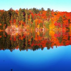 Mirror reflection gives me twice the fall colours Algonquin Park, Good Times, Tourism, Things To Do, Colours, River, Explore, Adventure, Reflection