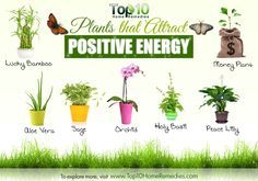 plants for positive energy