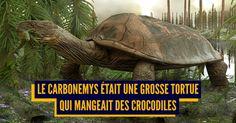 Top 10 des animaux préhistoriques badass qui ne sont pas des dinosaures