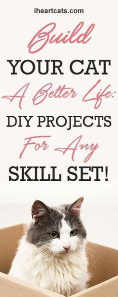 Looking for a cat DIY project that fits yours skills? This list has everything you need to know to make a cat shelf, litter box, food shelf, and more!