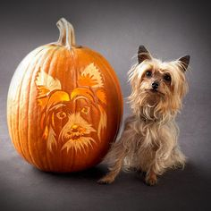 Any owner of a Yorkshire terrier knows that this breed is a pint-size personality bomb. (A charming personality, we might add!) So we designed this pumpkin stencil with a Yorkie's characteristic charisma in mind. Pumpkin Carving Stencils Free, Easy Pumpkin Carving, Pumpkin Carving Patterns, Free Stencils, Pumpkin Carvings, Dog Halloween, Halloween Pumpkins, Halloween Stuff, Halloween Labels