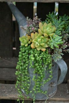 Easy Diy Garden Projects You'll Love Succulent Gardening, Garden Plants, Container Gardening, Indoor Plants, House Plants, Organic Gardening, Air Plants, Succulent Garden Ideas, Kitchen Gardening