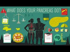 How the pancreas act