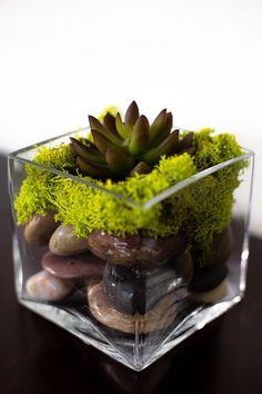 Square, stout vase, river rocks, dried bright green moss, succulent