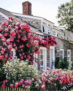 New England Photography ( Garden Cottage, Rose Cottage, Cottage Style, Seaside Garden, Nantucket Cottage, Nantucket Style, Nantucket Island, Landscape Design, Garden Design