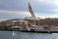 Seagulls and Topkapı Palace _ ISTANBUL by MustafaSEZER.deviantart.com on @deviantART