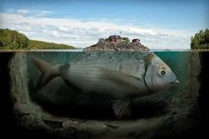 Photography + photoshop: Erik Johansson's surreal photo worlds. Swedish retouching photographer Erik Johansson is a master of illusion. He uses a computer to create pictorial worlds that look. Surreal Photos, Surreal Art, Photomontage, Erik Johansson Photography, Creative Photography, Art Photography, Improve Photography, Fishing Photography, Photography Articles