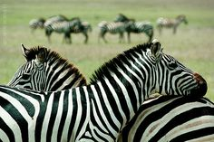 Serengeti National Park, Tanzania, Africa  My dream is to Africa and visit this place.